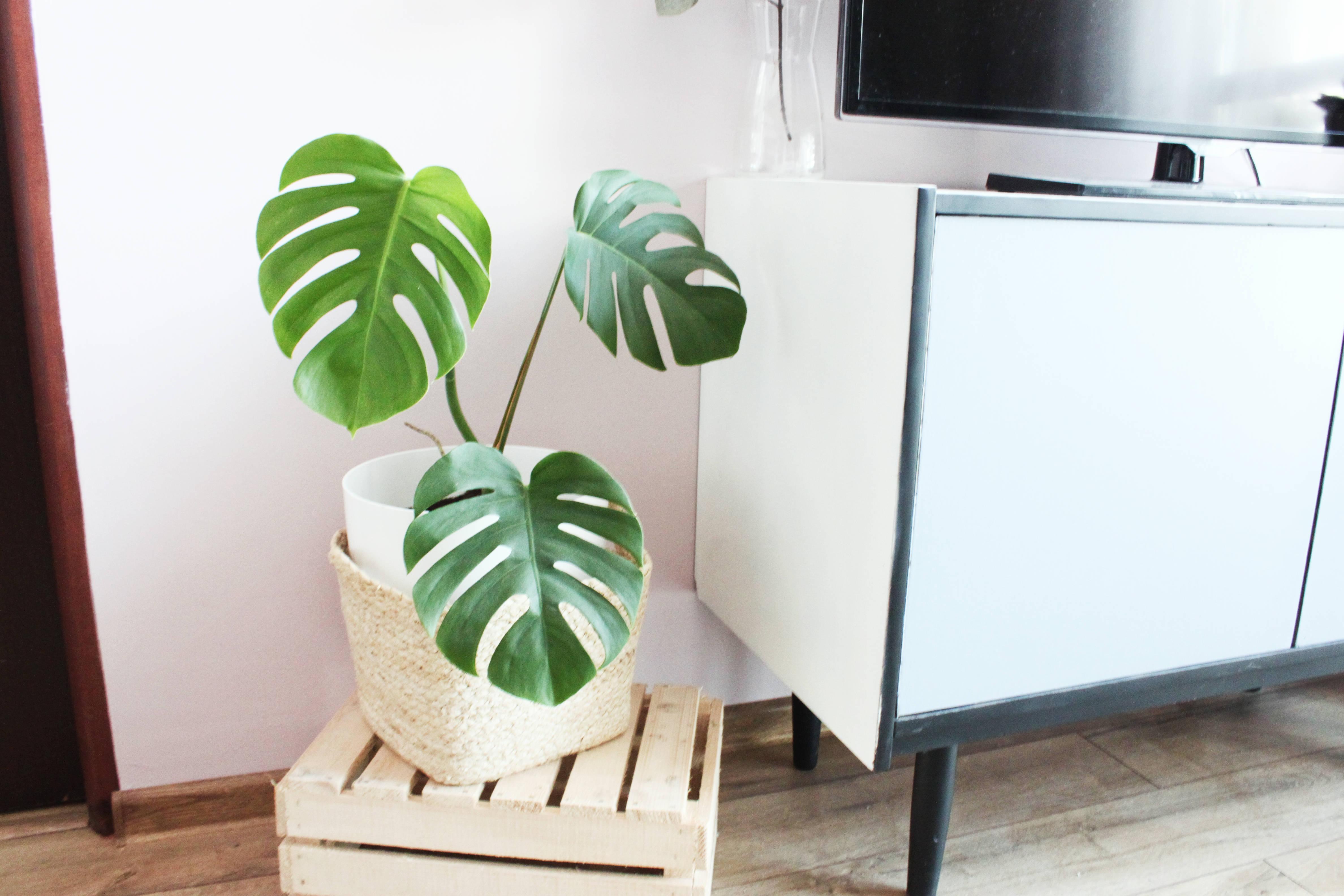 DIY szafka PRL - monstera i tropikalny motyw